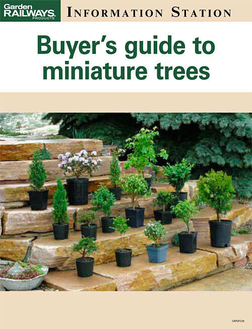 Buyer's guide to miniature trees